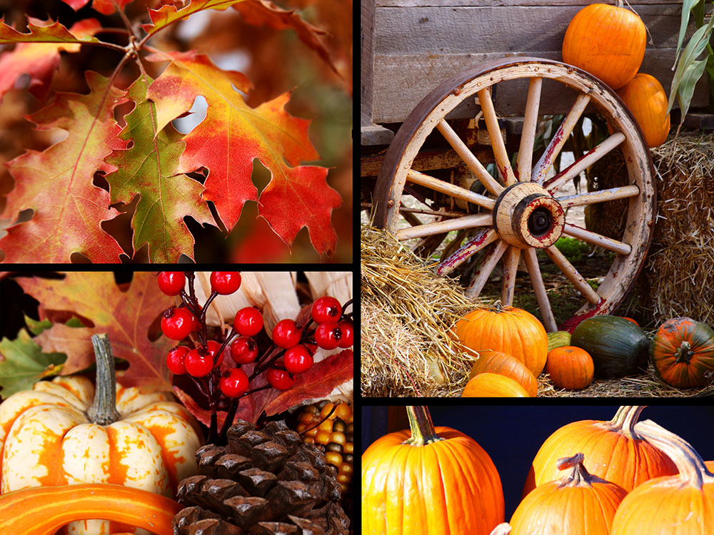 nothing kicks off this time of the year better than preparing your home with some seasonal home dcor - Harvest Decor